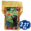 ロータス アダルト ラムレシピ 小粒 2.72kg Lotus ドッグフード 【正規品】 【ポイント10倍】