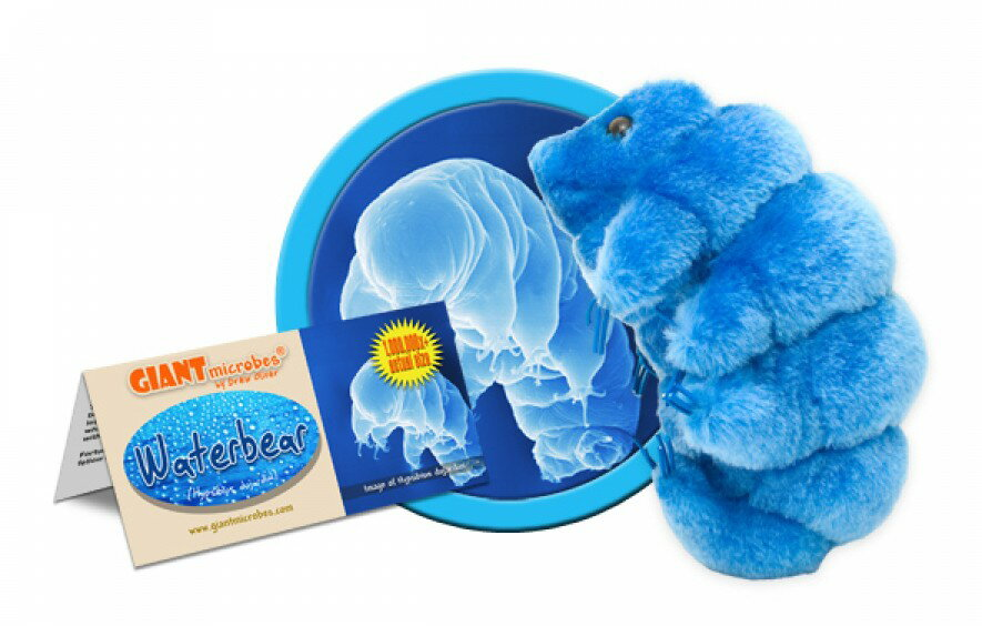 Waterbear: Hypsibius Dujardini (Giant Microbes) <ジャイアントマイクローブス>