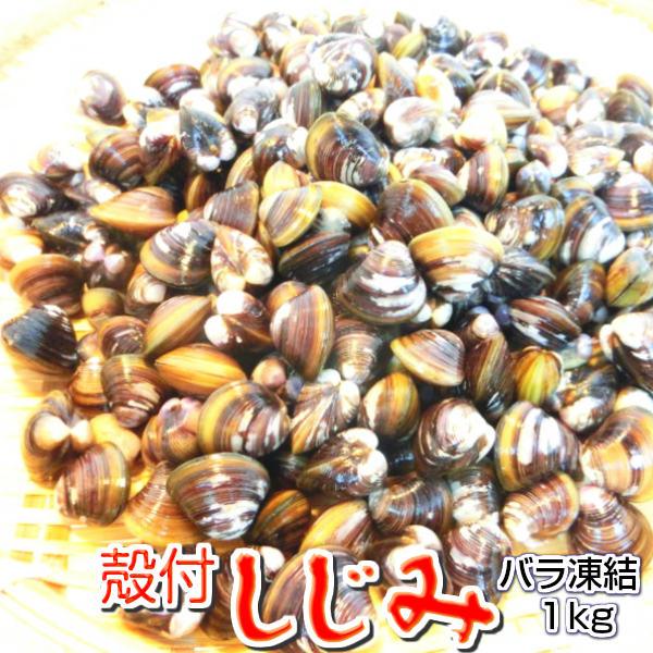 殻付き シジミ 1kg【蜆/しじみ/ばら凍結】 【冷凍】・殻付しじみ・