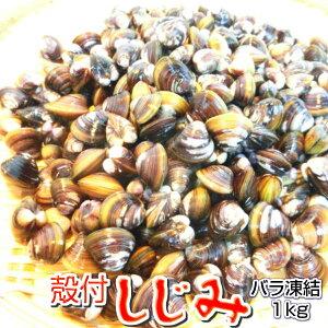 殻付き シジミ 1kg【蜆 しじみ バラ凍結】 【冷凍】・殻付しじみ・