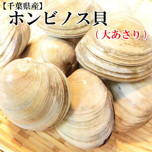 【千葉県産】ホンビノス貝 1kg 9個〜12個入 鮮度抜群【ほんびのす 大あさり はまぐり ハマグリ お吸い物 殻付き 出汁 バーベキュー】・ホンビノス貝・