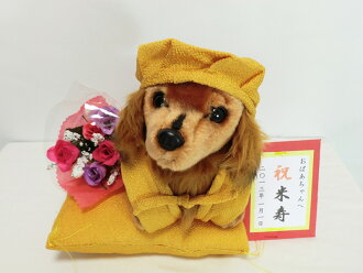 Original holiday beiju miniature Dachshund plush vest M size 3