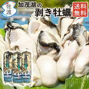 佐渡産牡蠣