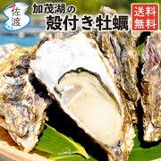 佐渡産殻付き牡蠣