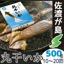 佐渡産丸干しいか 500gイカの旨みが凝縮日本海の地荒波で育ったイ真イカ10〜20匹も入ってる!!【RCP】【贈り物】【ギフト】