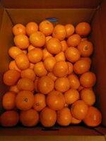 【野菜】有田みかん〈舌鼓(したづつみ)〉2Sサイズ1箱:約10kg入り