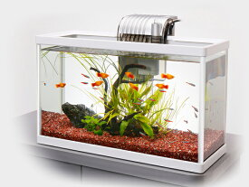 テトラ ホワイトアクアリウム スリム420 42cm観賞魚飼育セット