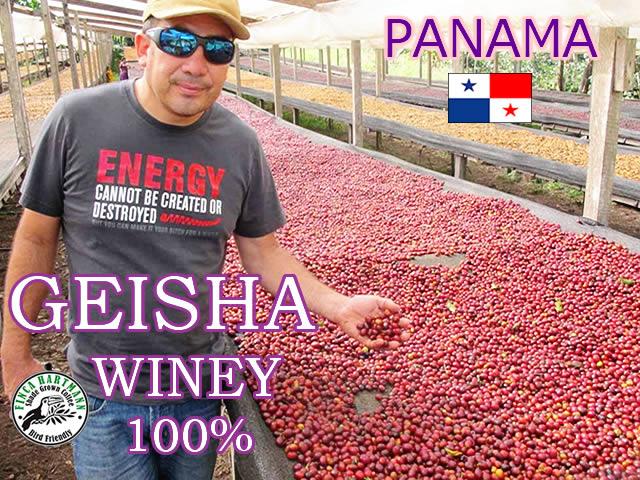 ゲイシャ ナチュラル ワイニー コーヒー 100g【パナマ産 ゲイシャ種100%】ハートマン オホデアグア農園
