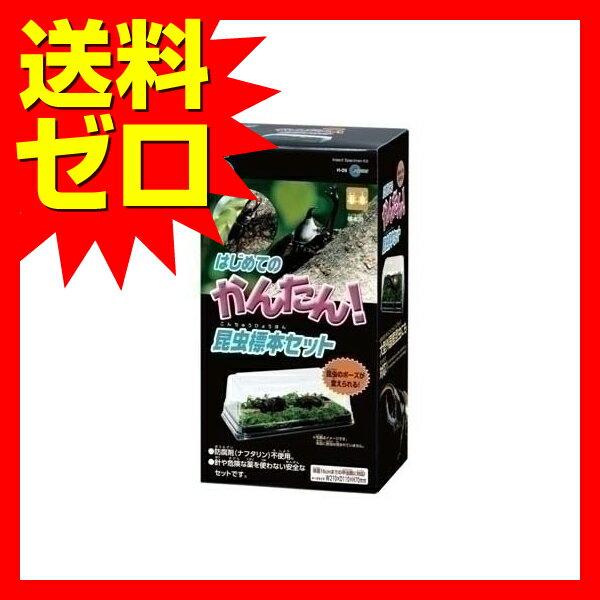 H09はじめての昆虫標本セット (株)マルカン雑誌掲載 TVで紹介 おしゃれ かわいい※商品は1点(個)の価格になります。