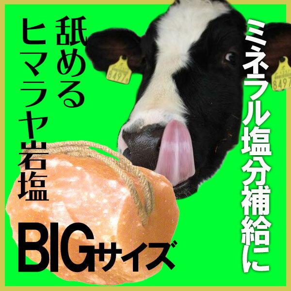 アニマルソルト 5-7kg 家畜用ヒマラヤ岩塩 【特大】【お徳用サイズ】【着後レビューで 100円OFFクーポン プレゼント】