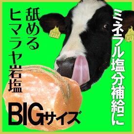 アニマルソルト 5-7kg 家畜用ヒマラヤ岩塩 【特大】【お徳用サイズ】