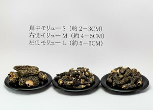 イタリアン産ドライ・モリュー(アミガサだけ)高級品乾燥キノコ モリュー(M) 20g