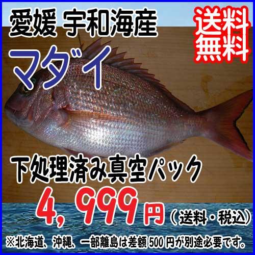 愛媛 宇和海産 【 マダイ / 真鯛 】 1.5-2.0kg 宇和海の幸問屋 送料無料