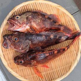 愛媛 ( カサゴ ) 150-300gサイズ 2-3匹 500-600g原体分 煮魚 焼魚 揚げ物 下処理済み 冷凍 送料無料 北海道、沖縄、東北は別途送料 宇和海の幸問屋