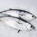 高知沖 天然一本釣り ( カツオ ) 4-5kg 送料無料 宇和海の幸問屋
