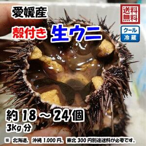 愛媛 天然 ( 殻付き 生ウニ ) 約3kg(18-24個) 紫ウニ 赤ウニ 素潜り海士 送料無料 浜から直送 宇和海の幸問屋