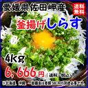 愛媛 佐田岬産 【 釜揚げしらす 】( 4kg )送料無料 宇和海の幸問屋