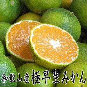 【送料無料】和歌山産 極早生みかん(青切りみかん) 5kg 秀品(贈答用にも)