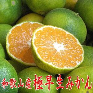【送料無料】和歌山産 極早生みかん(青切りみかん) 3.5kg 秀品(贈答用にも)