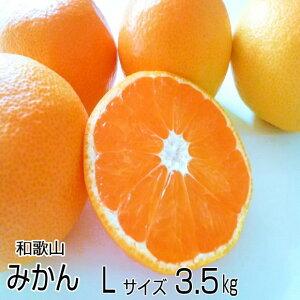 【送料無料】濃厚な味のとろける美味しさ!和歌山産 高糖度の温州みかん Lサイズ 3.5kg(約28個)