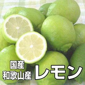 【送料無料】国産(和歌山産)グリーンレモン/レモン 訳あり 5kg【防腐剤不使用/ノーワックス】