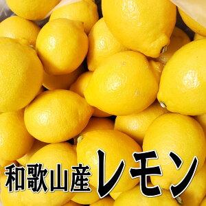 国産(和歌山産)グリーンレモン/レモン 秀品 3kg【防腐剤不使用/ノーワックス】送料無料