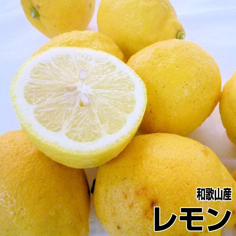 【送料無料】国産(和歌山産)グリーンレモン/レモン 訳あり 5kg 【防腐剤不使用/ノーワックス】