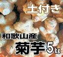 【送料無料】菊芋(キクイモ)生 5kg 土付き 和歌山産【無農薬】テレビで話題のスーパーフード