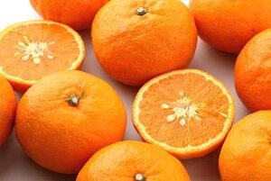 【送料無料】カラーマンダリン/なつみ 5kg 和歌山産 希少な完熟柑橘
