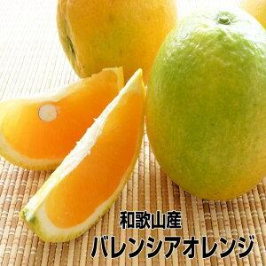 【送料無料】【訳あり】和歌山産≪バレンシアオレンジ≫5kg めずらしい国産オレンジ