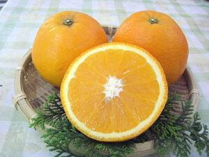 【送料無料】【訳あり】和歌山産 ≪福原オレンジ≫2.5kg めずらしい国産オレンジです