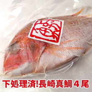 ご自宅用 煮付けに!焼き魚に!長崎産天然真鯛計4尾(下処理済み) [内食まとめ買い]