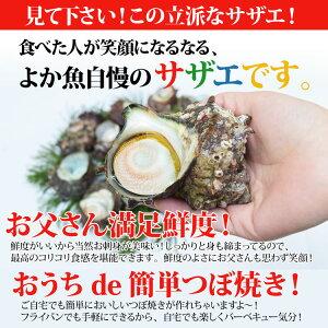 長崎産天然活サザエ3