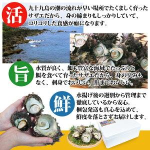 長崎産天然活サザエ6
