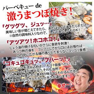 長崎産天然活サザエ11