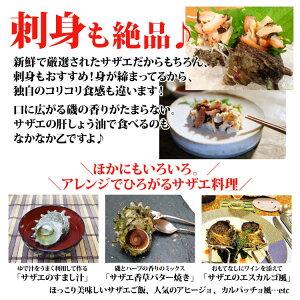 長崎産天然活サザエ12