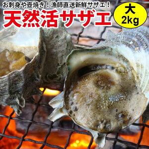 ギフト 送料無料 サザエ(さざえ) 大サイズ 120g前後 計2kg (17個前後)長崎県の大自然の中で育ったから栄養抜群!コリコリうまい!!調理簡単レシピ付! お祝い 誕生日 刺身 つぼ焼き BBQバーベ