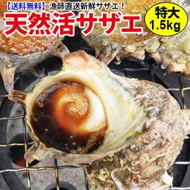 送料無料 特大サザエ 計1.5kg(200g前後7個前後)コリコリうまい!!長崎の大自然で育ったから栄養抜群!調理簡単!レシピ付ギフト お祝い 誕生日 刺身 つぼ焼きBBQ バーベキュー