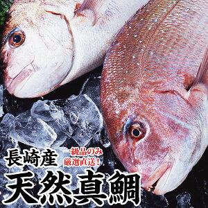 ギフト お祝い鯛 長崎産天然真鯛(釣りもの一級品・活もの)1.5kg前後 1尾 (3〜4人前)熨斗 プレゼント お祝い マダイ お食い始め