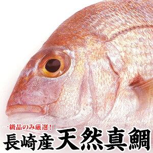 ギフト 長崎産天然真鯛(釣りもの一級品・活もの)4kg前後 1尾 (6〜9人前)熨斗 プレゼント お祝い マダイ お食い始め