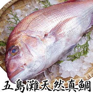 ギフト 長崎産天然真鯛(釣りもの一級品・活もの)2.5kg前後 1尾 (4〜6人前)熨斗 プレゼント お祝い マダイ お食い始め