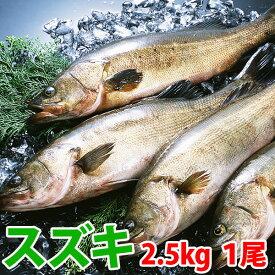 スズキ(すずき) 1尾(2.5kg前後)刺身はもちろん塩焼き・フライ・ムニエルなどお料理の幅がグン↑↑と広がる