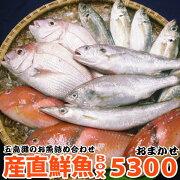 おまかせ鮮魚セット