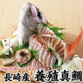 ギフト 長崎産真鯛(養殖マダイ) 1.2kg前後1尾(2〜3人前)環境にこだわった真鯛ギフト プレゼント お祝い マダイ