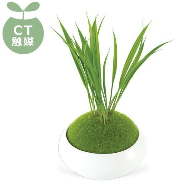 WA BONSAI(和盆栽) DEODORANT ARTIFICIAL GREEN 消臭アーティフィシャルグリーン Narcissus(スイセン) KH-61062【ガーデニング・花・植物・DIY】