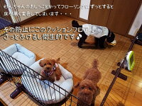 CES8217ラグ(Y)ペット用ダイニングラグカーペット消臭クッションフロアラグ約182×285cm防炎抗菌日本製