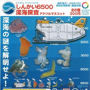 サイエンステクニカラー しんかい6500 深海探査 アクリルマスコット 全8種セット いきもん ガチャポン ガチャガチャ ガシャポン