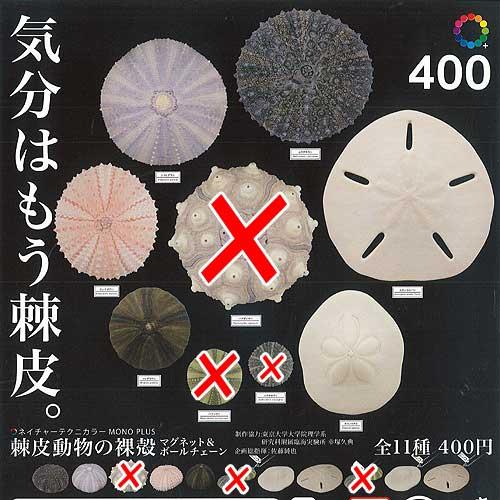 ネイチャーテクニカラー MONO PLUS 棘皮動物の裸殻 マグネット&ボールチェーン 8種セット いきもん ガチャポン ガチャガチャ ガシャポン