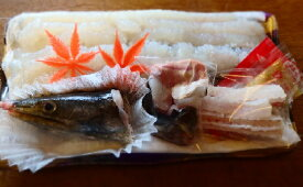 【送料無料】 淡路島産極上天然黄金ハモ 市場関係者からもう幻とも言われている極上鱧1本約1.2kgサイズ 4人前を発送当日骨切り調理しお届けします