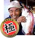 【漁港直送 お刺身用】淡路島由良産活締め極上天然桜鯛約900〜1kg